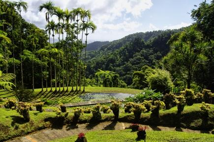 Tropical Garden Balata Martinique